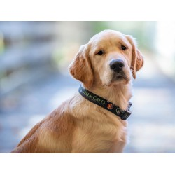 Green Capes Buckle Dog Collar